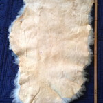 14-226-1 $ 140 Border Leicester/Corriedale cross sheepskin, tanned side