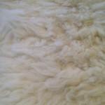 14-226-3 Border Leicester/Corriedale cross sheepskin, closeup, $130