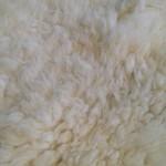 14-226-2 Dorset Horn sheepskin, close up, $110