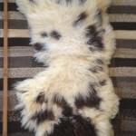 14-138-1 Jacob lambskin, fleece side, $130