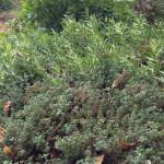 Thyme, French tarragon, flat leaf parsley