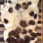 14-559-1 Jacob sheepskin fleece side $95