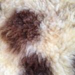14-559-1 Jacob sheepskin closeup, $95