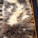 14-582-2 Jacob sheepskin fleece side $175