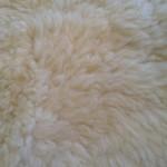 14-396-1 Dorset Horn sheepskin closeup $100
