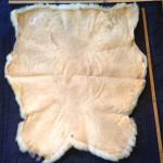 14-396-1 Dorset Horn sheepskin tanned side $100